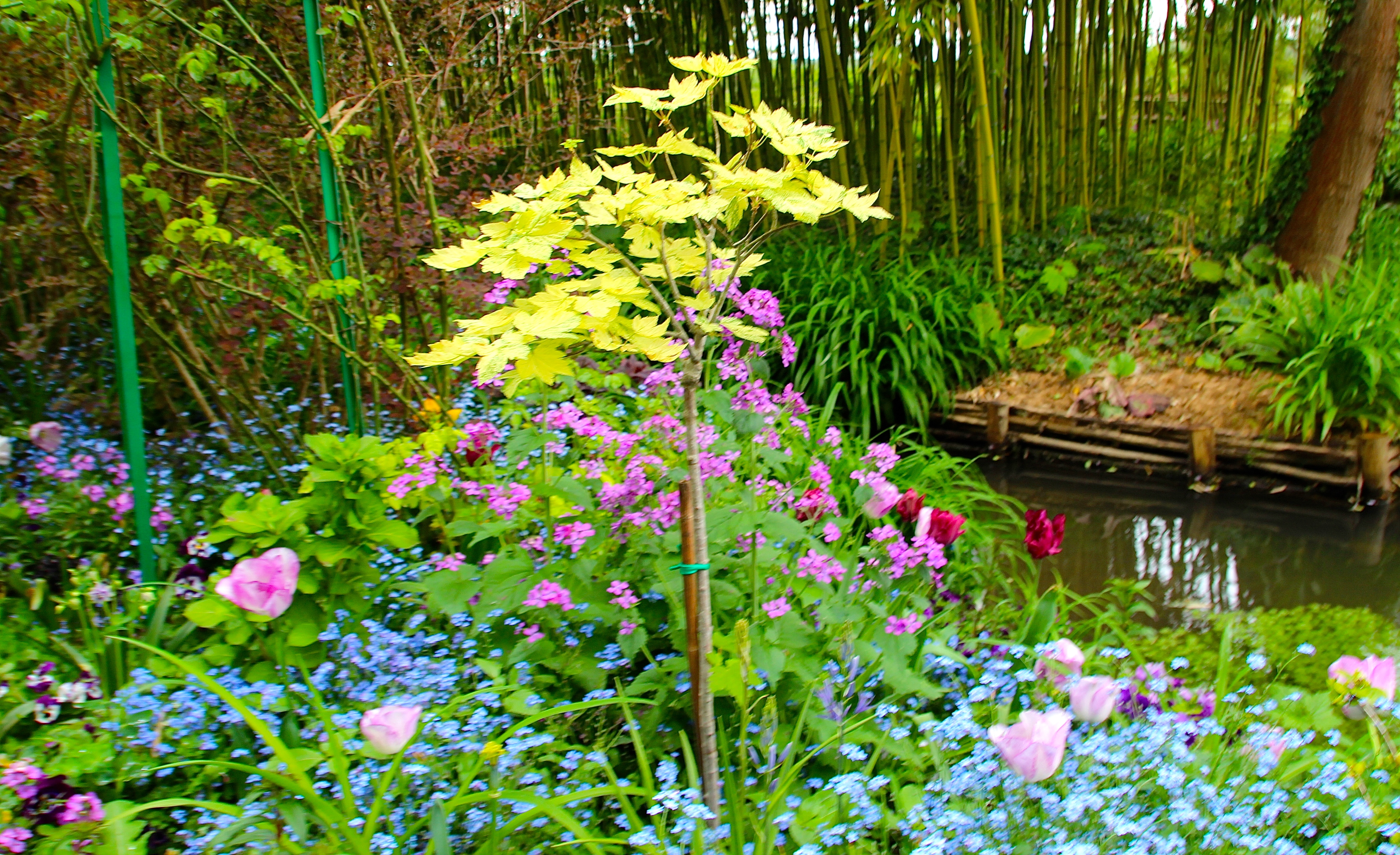 Spring flowers blooming at Giverny. France. 05.09.16. 13