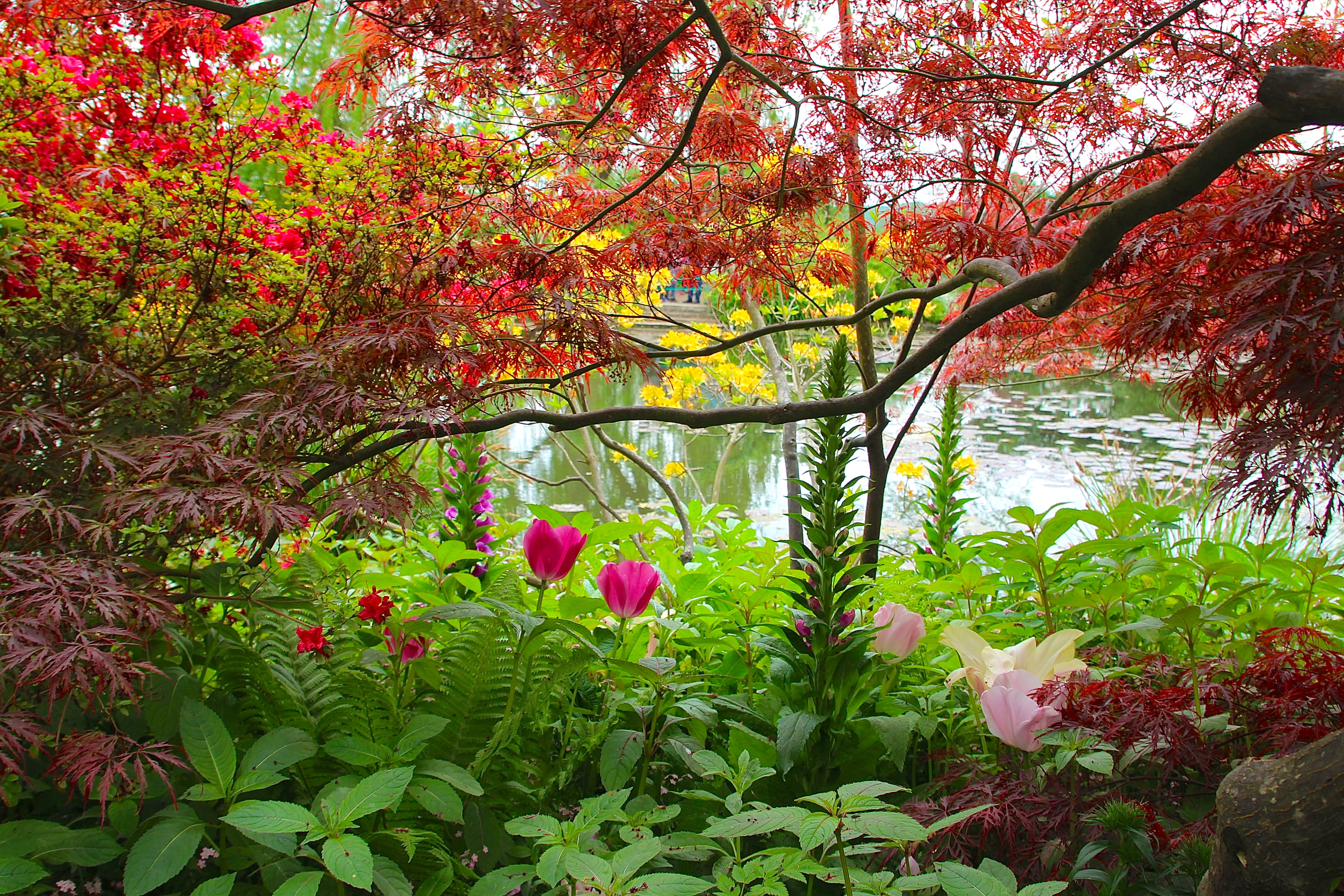 Spring flowers blooming at Giverny. France. 05.09.16. 14