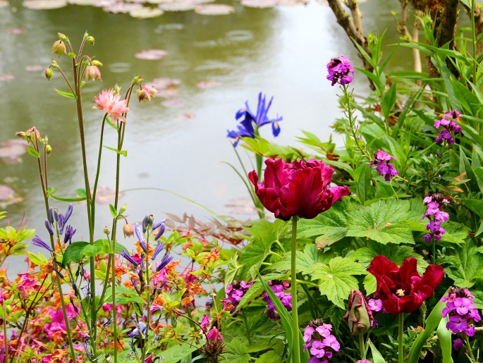 Spring flowers blooming at Giverny. France. 05.09.16. 29