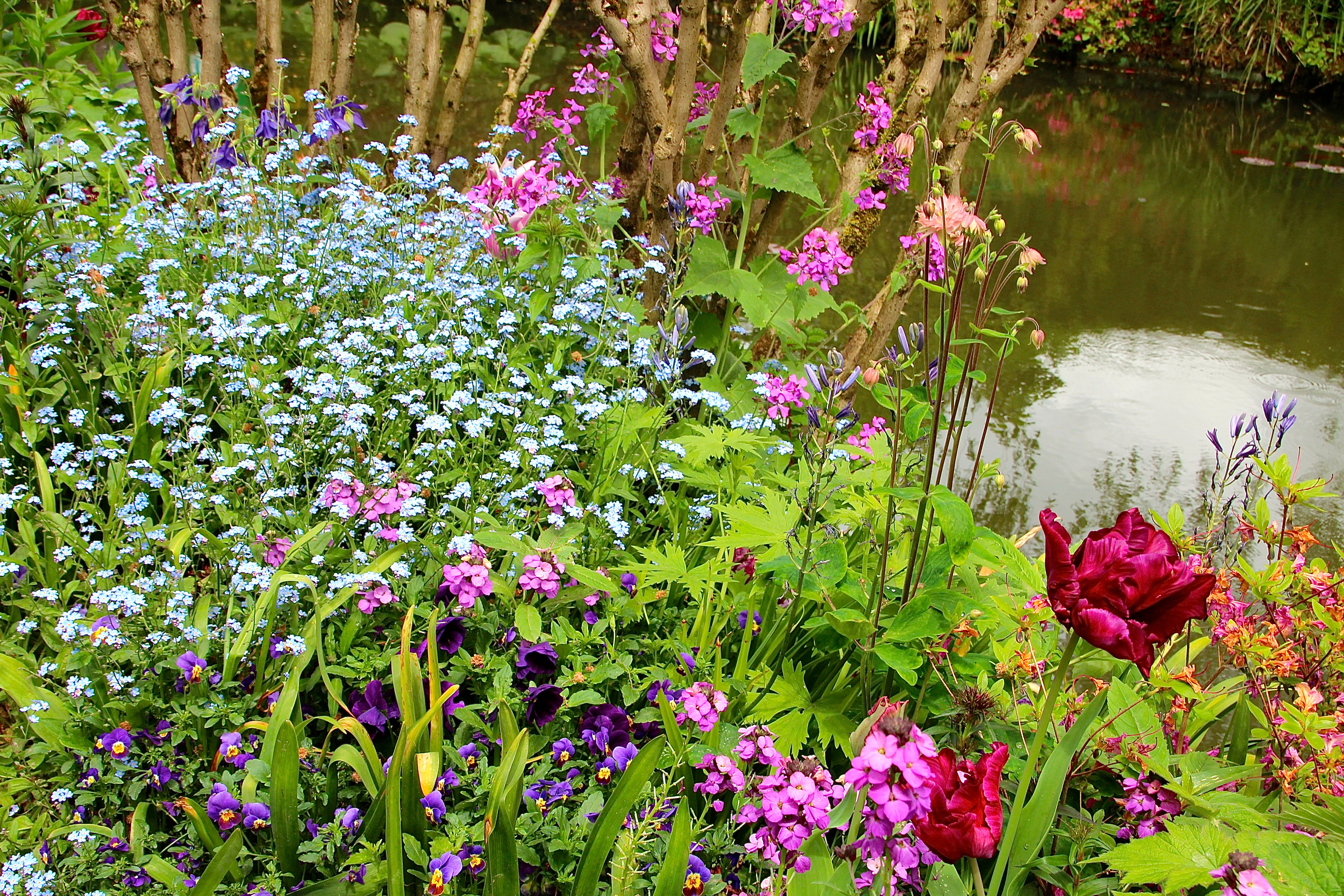 Spring flowers blooming at Giverny. France. 05.09.16. 30