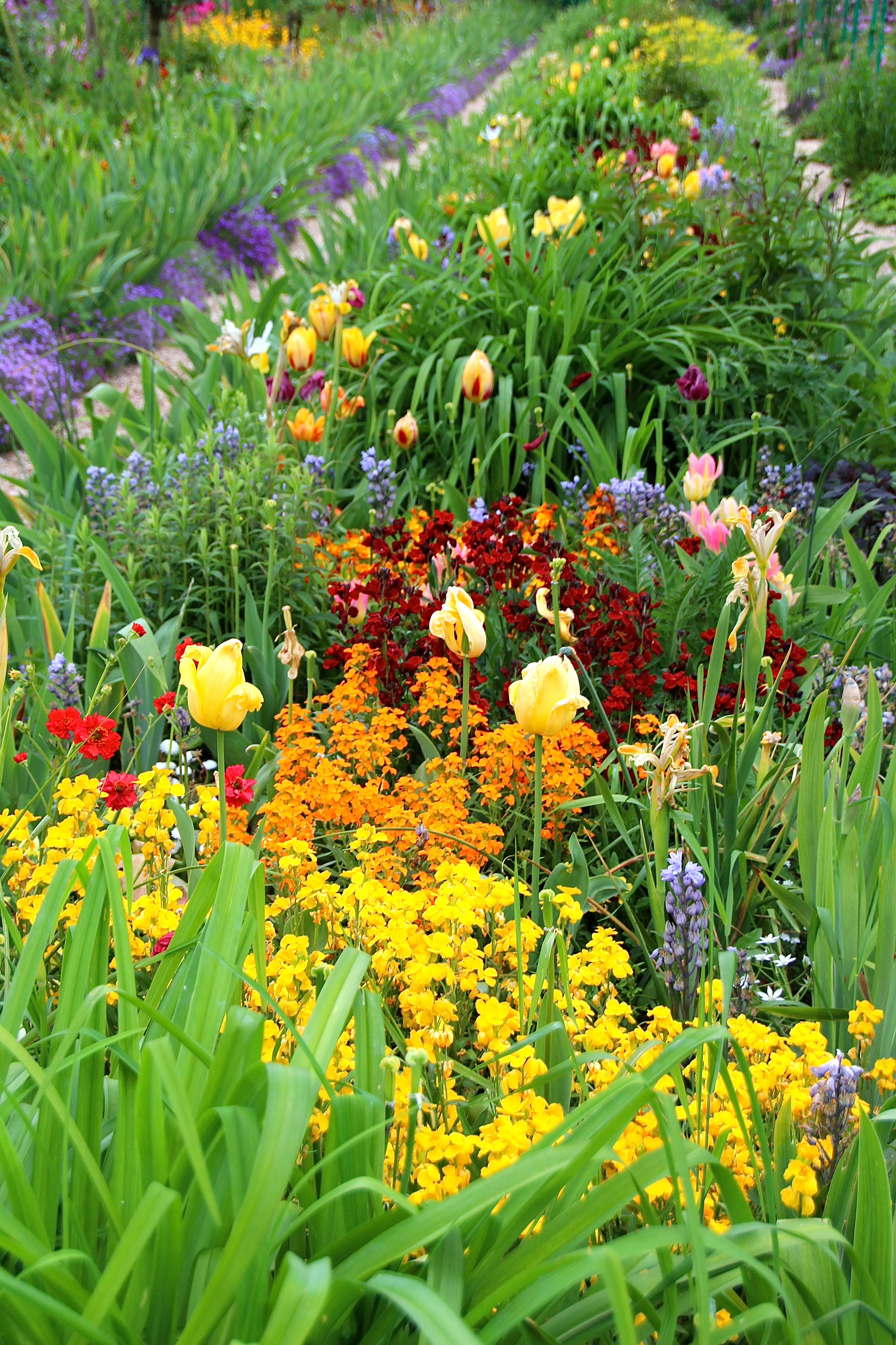 Spring flowers blooming at Giverny. France. 05.09.16. 4