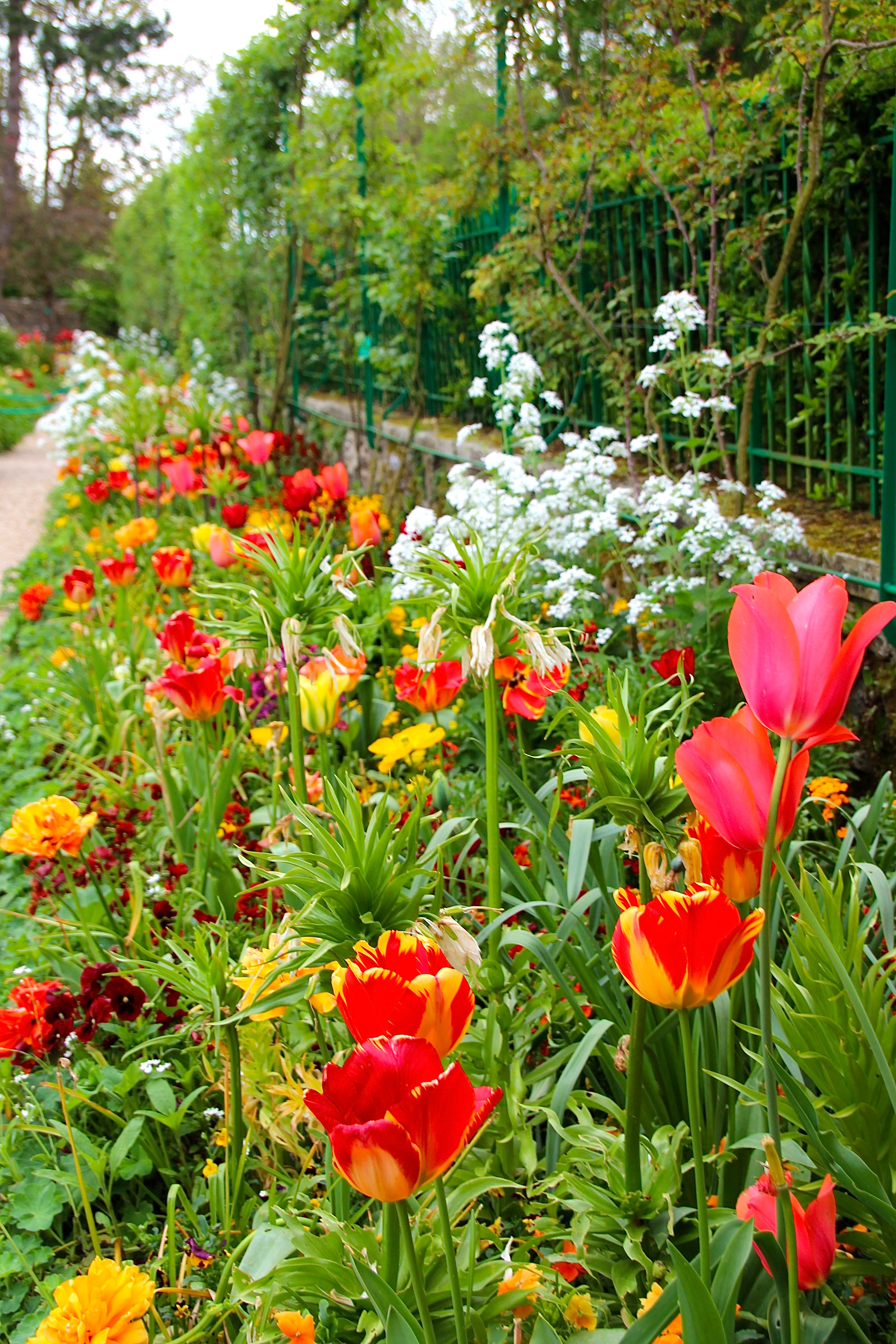 Spring flowers blooming at Giverny. France. 05.09.16. 5