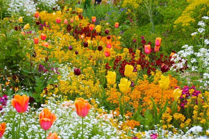 Spring flowers blooming at Giverny. France. 05.09.16. 9