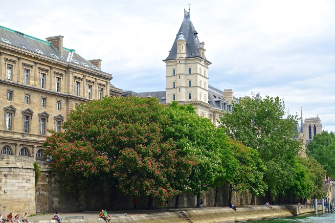 Chestnut trees along The Seine River