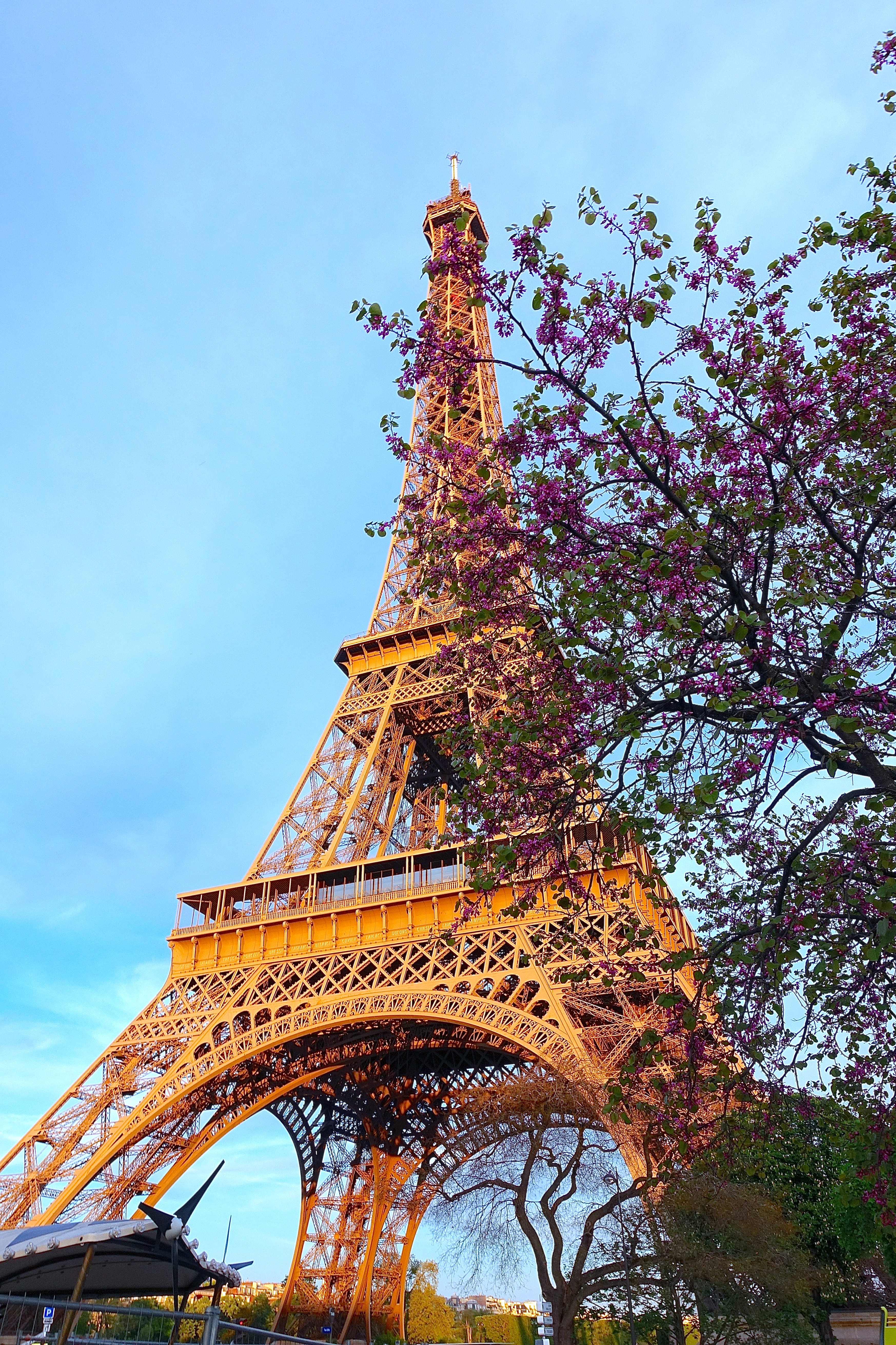 Eiffel Tower and flowering tree