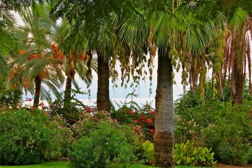 Garden near Sea of Galiliee. Israel