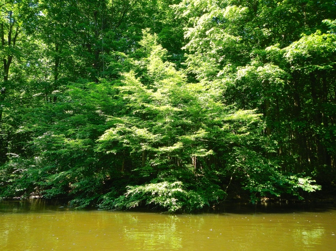 Glorious Greens on the Rogue River MI
