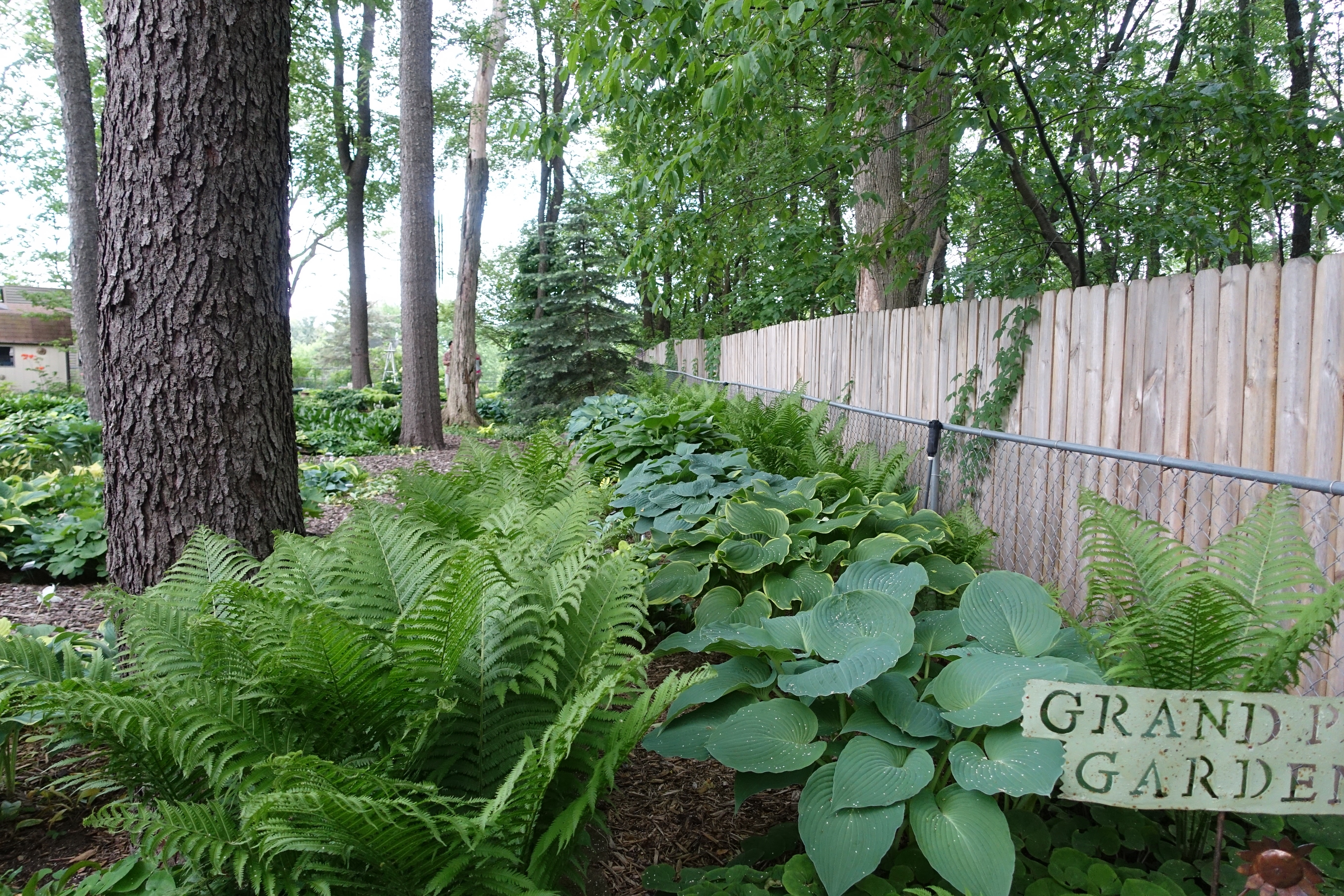Hosta Garden. 10