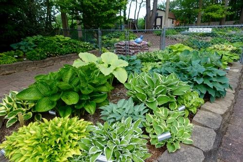 Hosta Garden 13