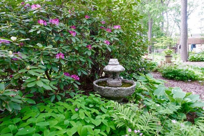 Hosta Garden. 3