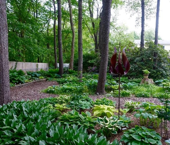 Hosta Garden. 4