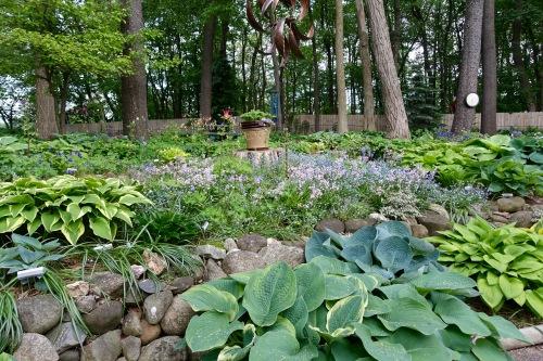 Hosta Garden. 5