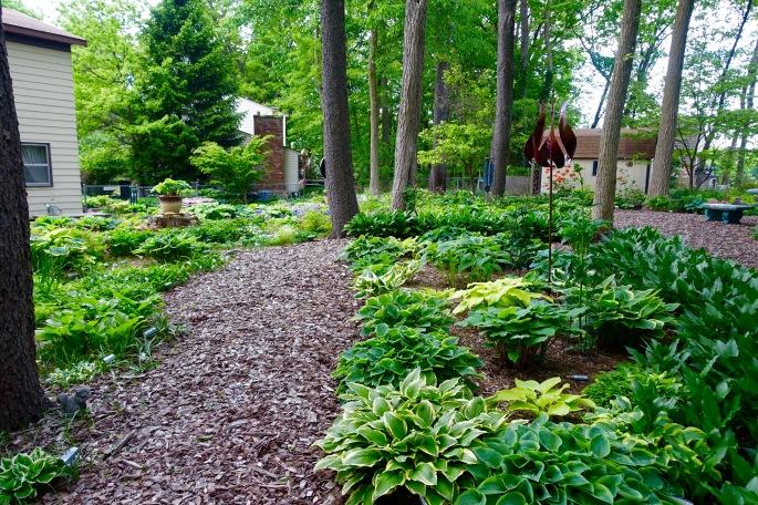 Hosta Garden. 6