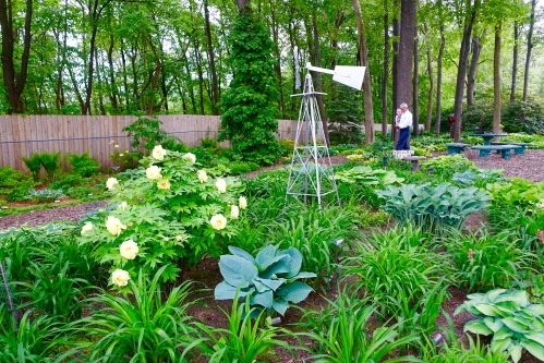 Hostas Galore!+