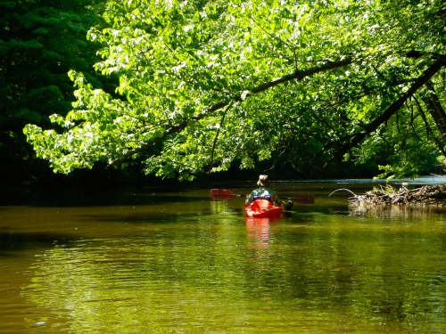 Kayaking under low-hanging trees on the Rogue River MI