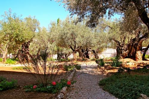 Mt. of Olives. Jerusalem