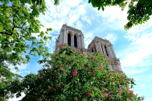 Notre Dame Cathedral. Paris. Spring Chestnuts in bloom