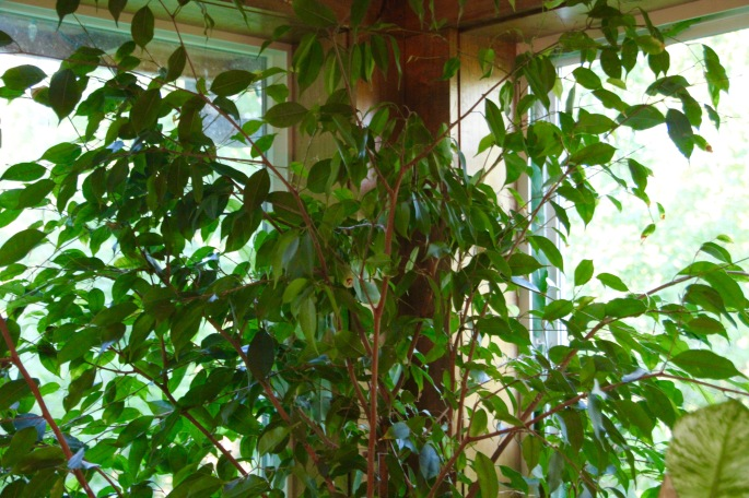 Plants in front of window