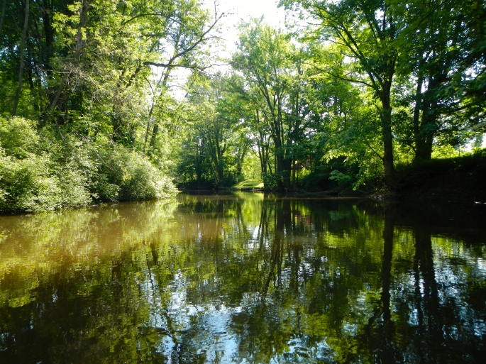 Reflections on the Rogue River MI