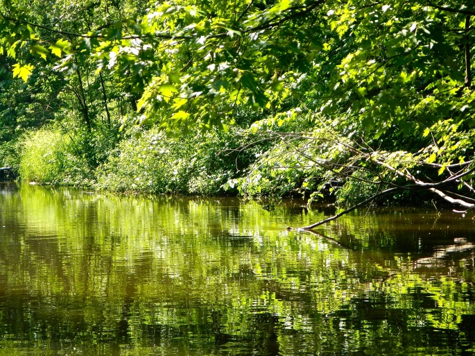 Soothing Greens on the Rogue River MI