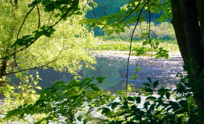 Sun filtering through trees on lake