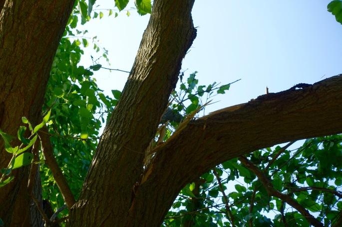Tree branch splitting off
