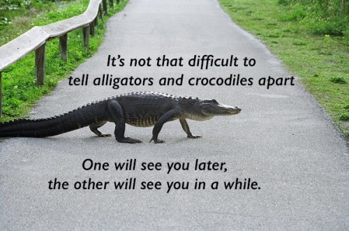 Alligator v.s. Crocodile