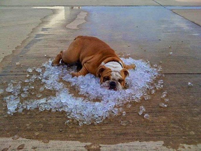 Hot dog on ice