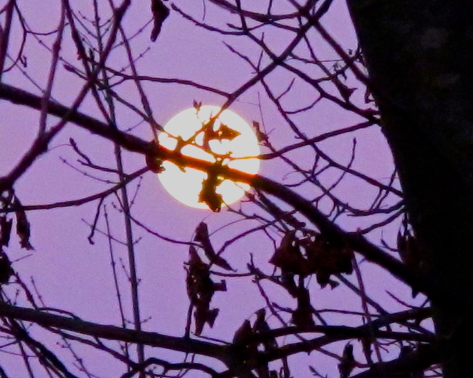 full-moon-behind-trees