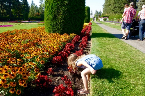 Little girl looking at roses