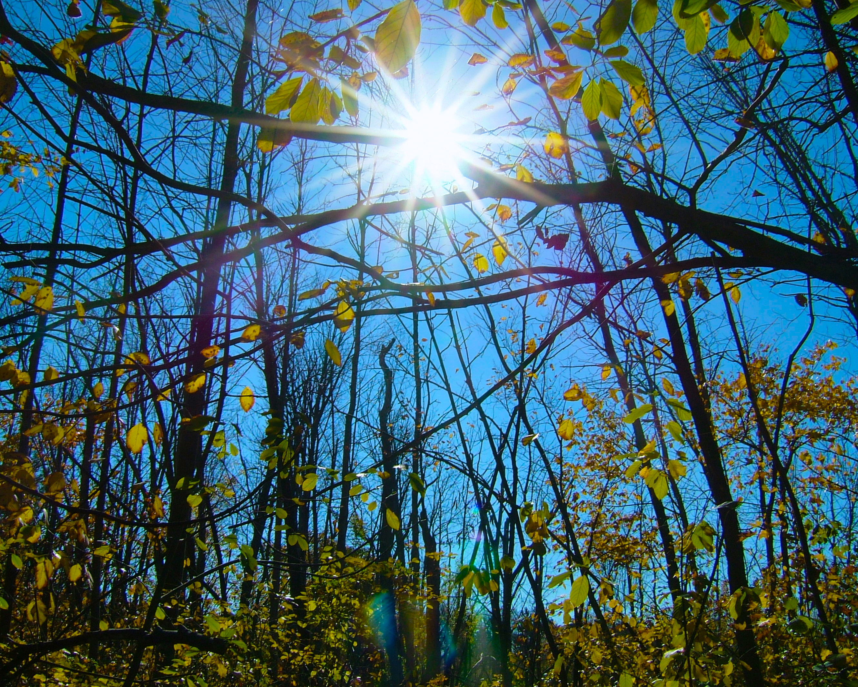 shineshine-and-autumn-leaves