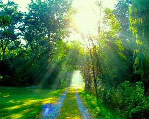 sun-on-lane