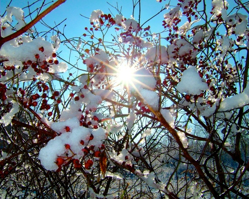 winter-sun-on-rose-hips