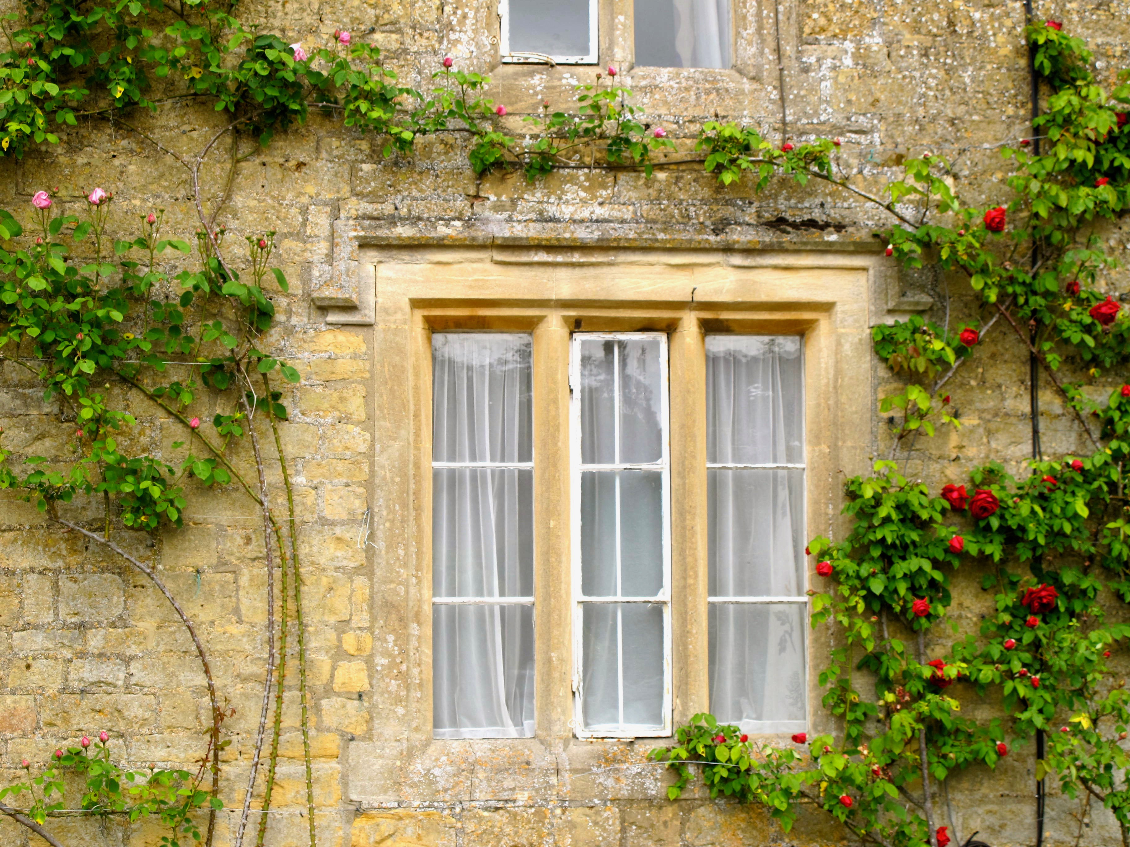 climbing-roses-on-a-brownstone-cottage-cotswold-england