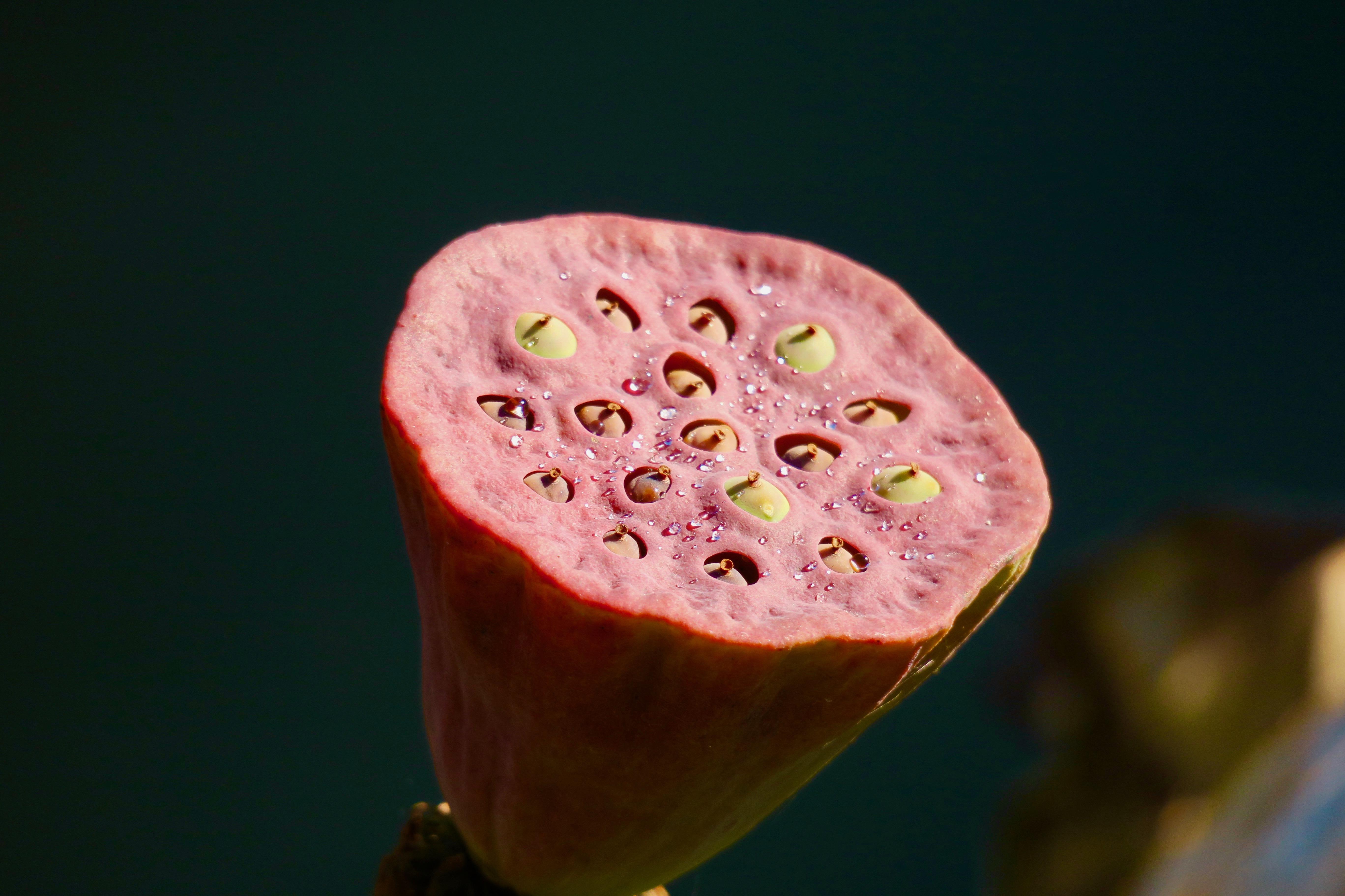 lotus-seed-pod-meijer-garden-10-09-16