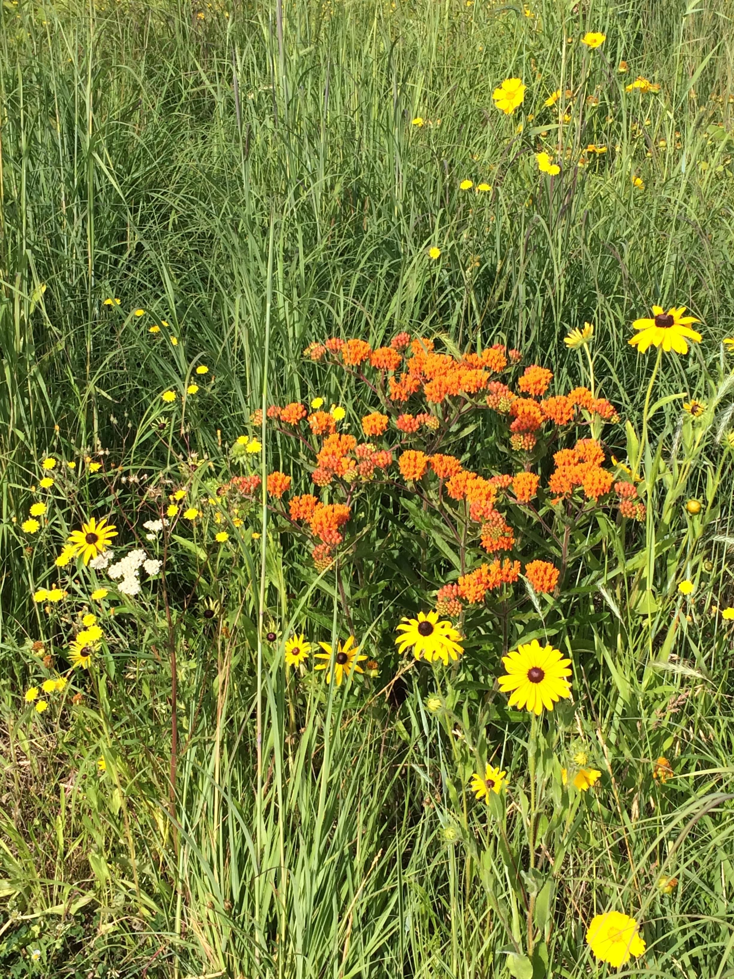 luton-park-mi-wildflowers