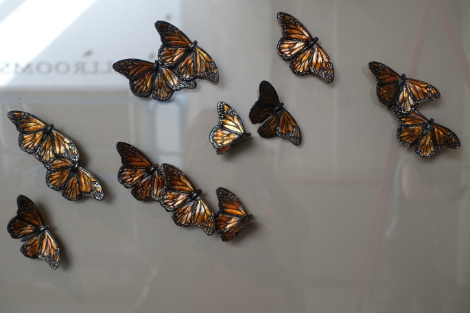 monarch-butterfly-exhibit