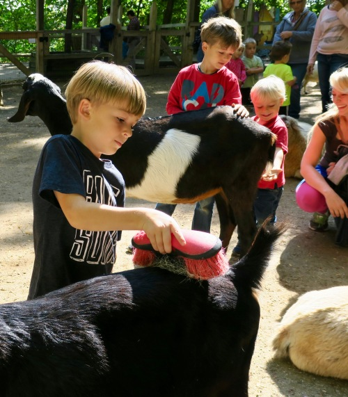 petting-zoo-at-john-ball-park