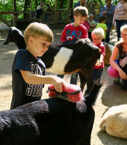 petting-zoo-at-john-ball-park