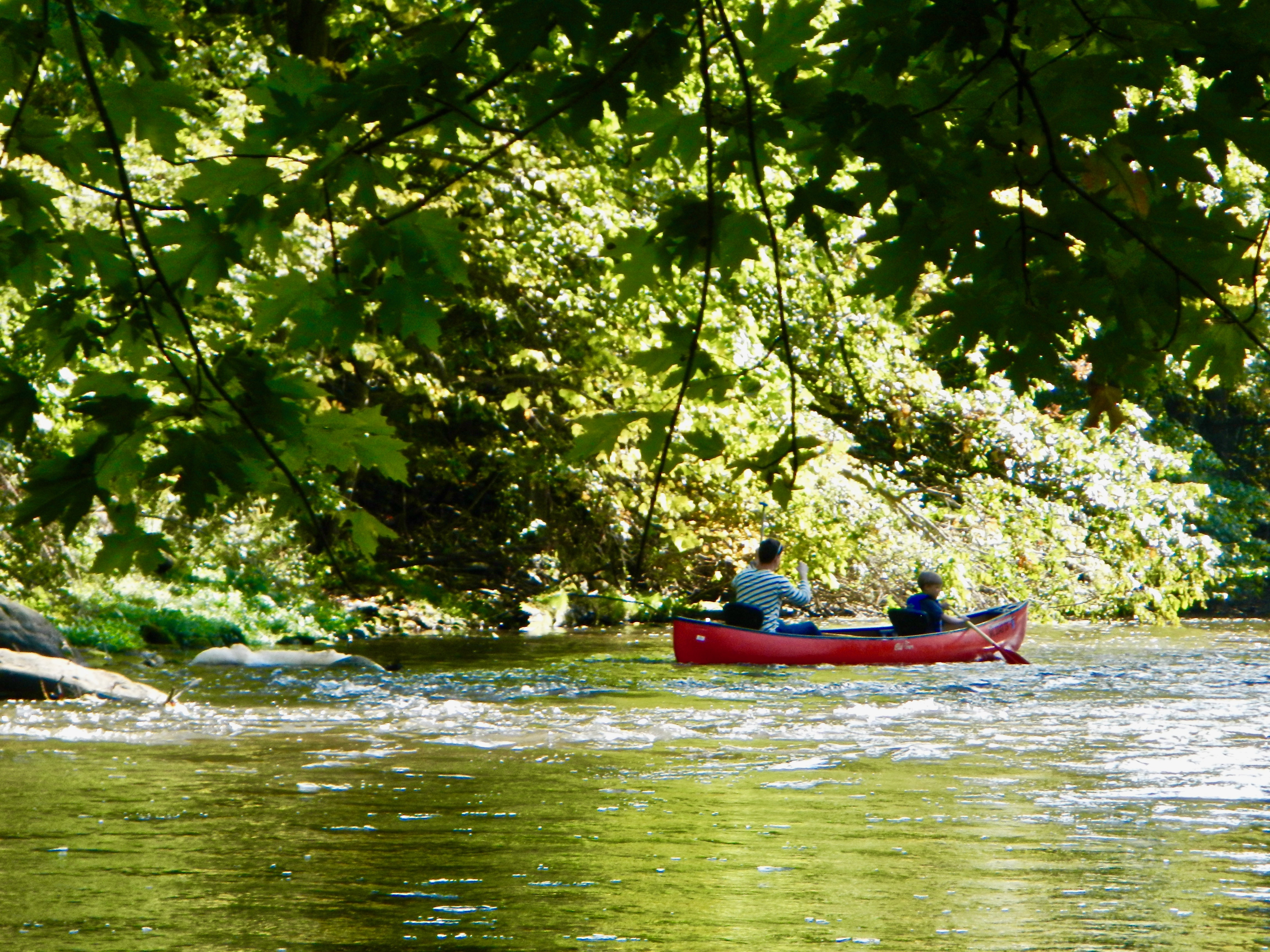 canoeing-under-a-canopy-of-green-along-the-rogue-river
