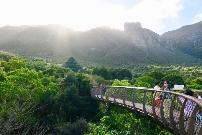 centenary-tree-canopy-walkway-in-kirstenbosch-national-botanical-garden-sa-2