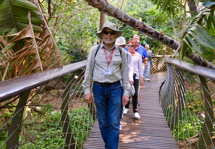 centenary-tree-canopy-walkway-in-kirstenbosch-national-botanical-garden-sa