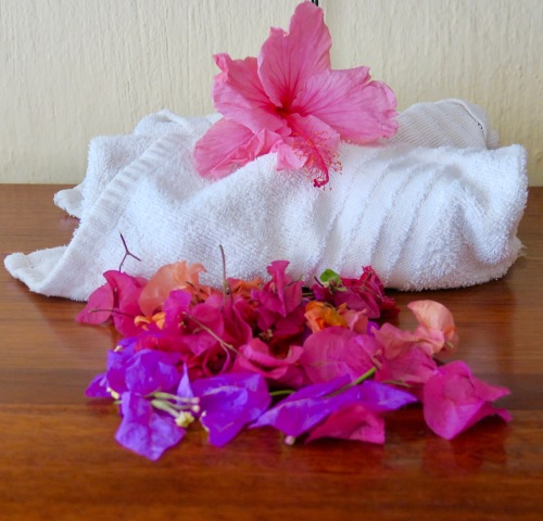 hibiscus-and-bougainvillea-botswana
