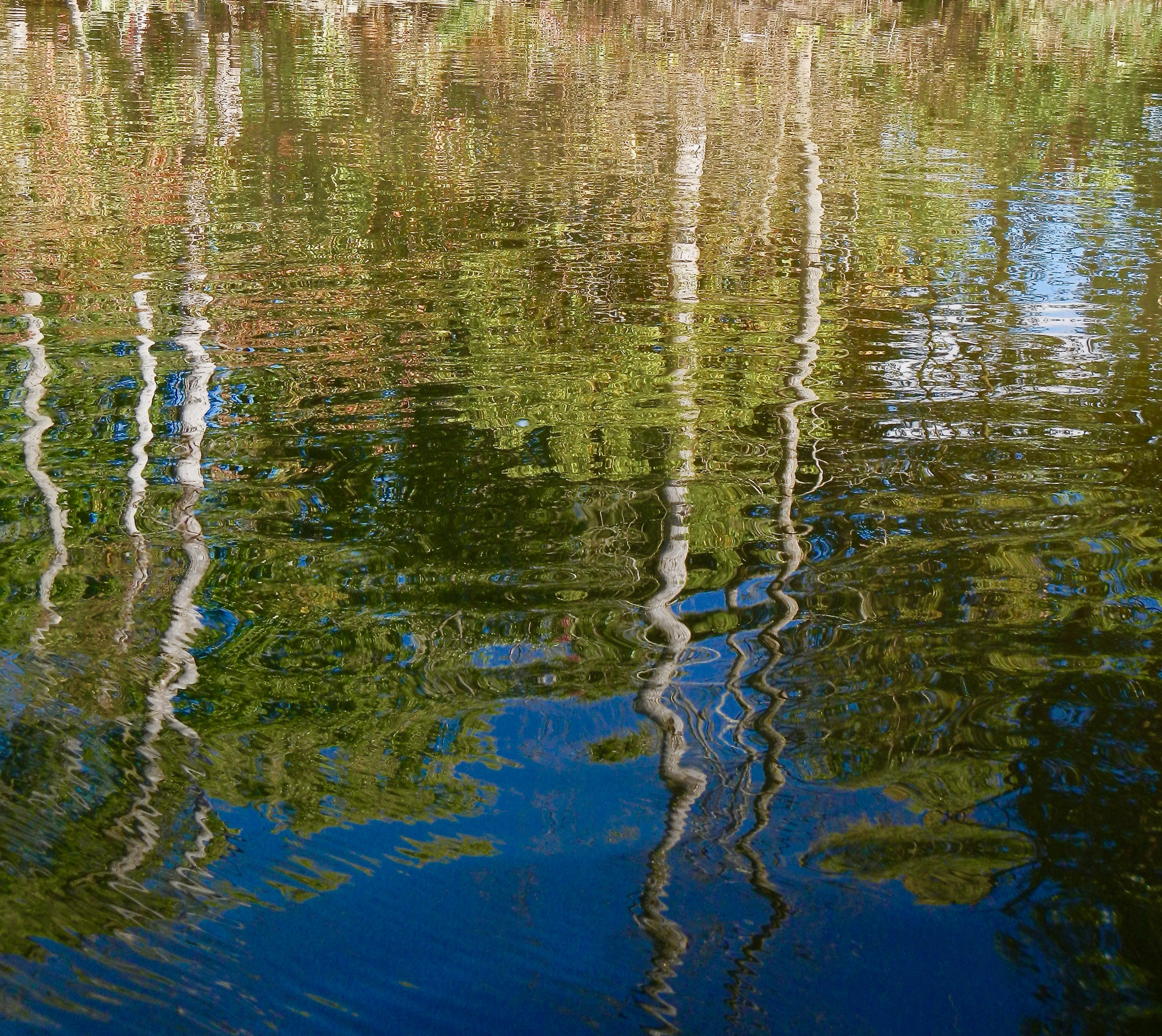 reflections-of-birches-along-rogue-river
