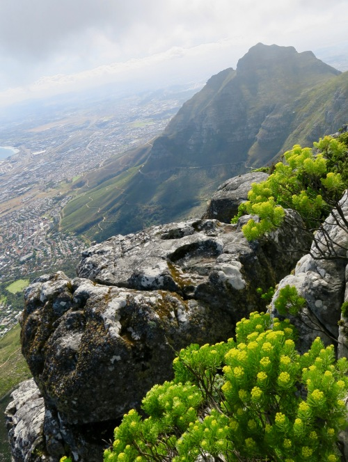 sandstone-fynbos-on-table-mountain