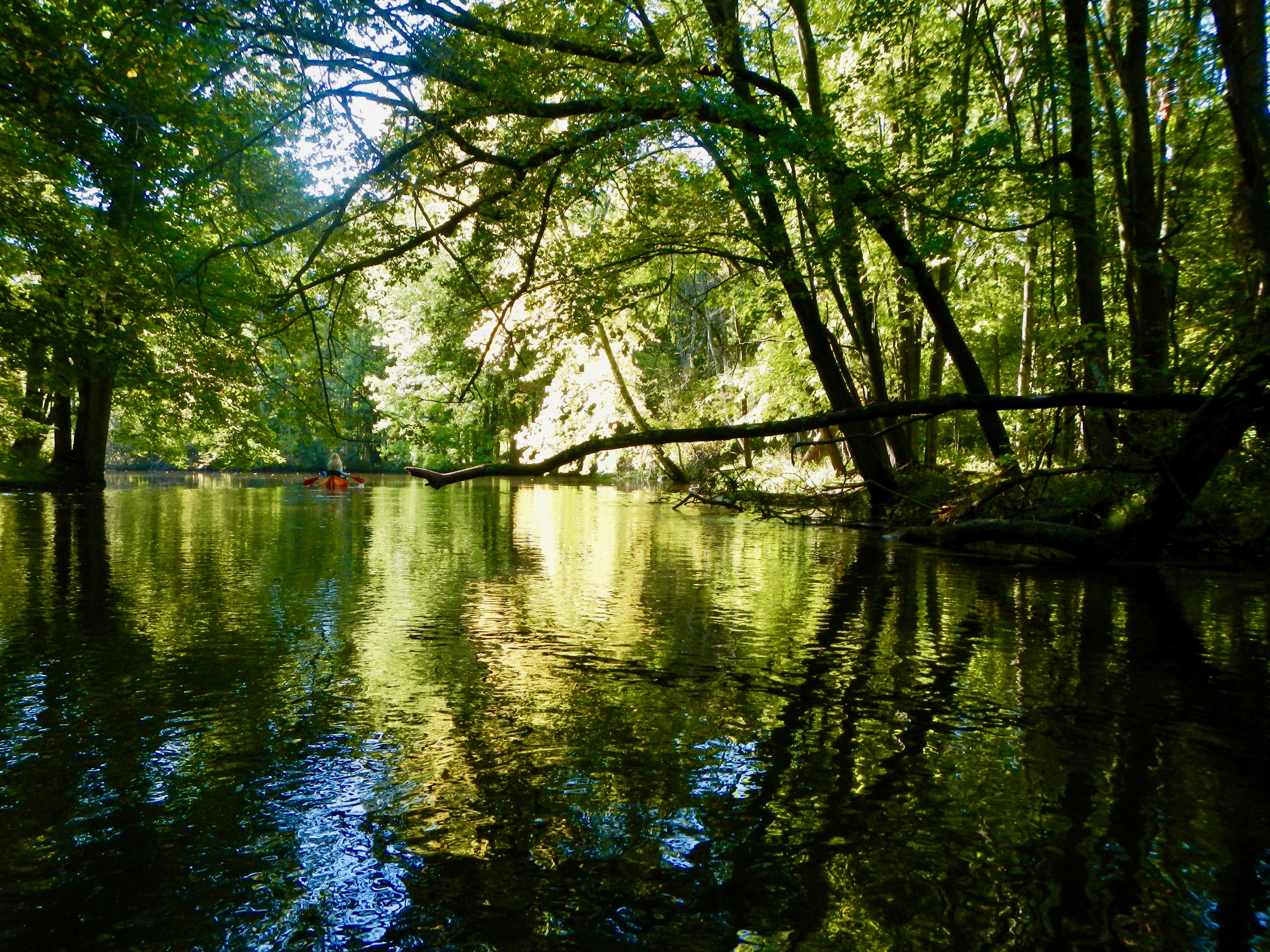 shady-green-bows-over-rogue-river