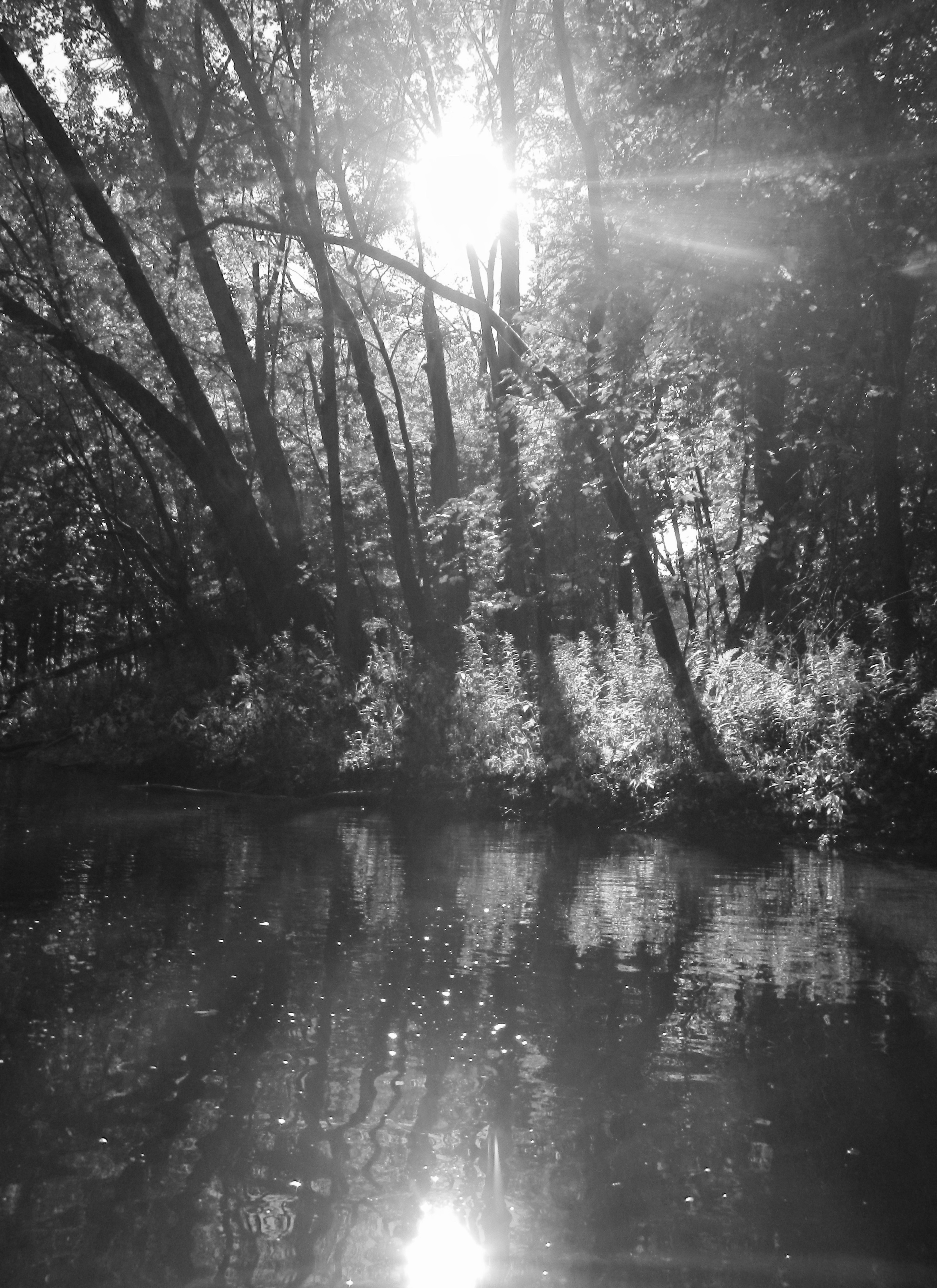 study-in-sun-and-shadow-on-rogue-river
