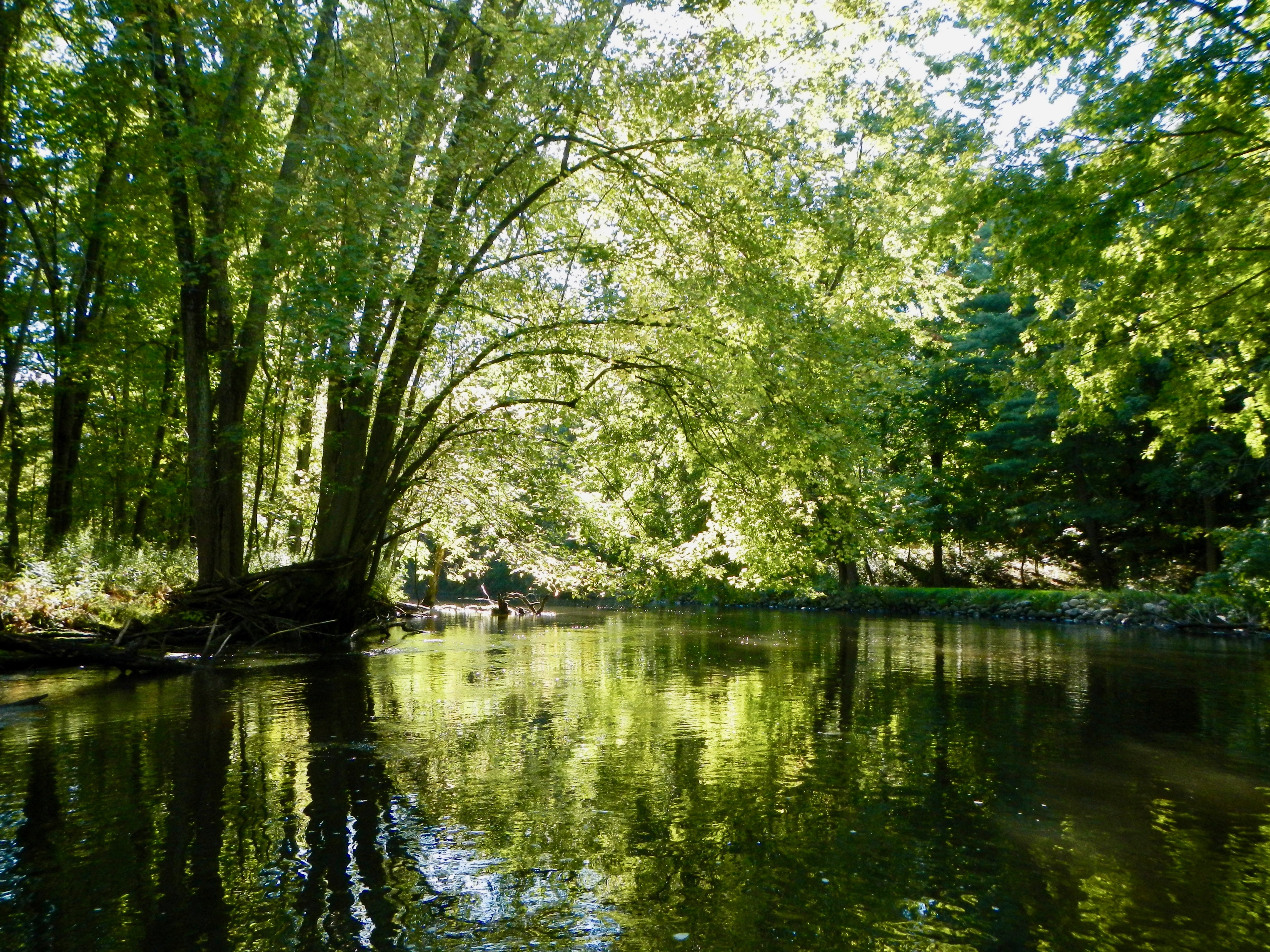 trees-overhanging-rogue-river