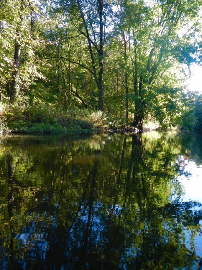 trees-reflecting-in-rogue-river