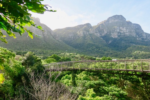 view-from-boomslang-centenary-walkway-in-kirstenbosch-national-botanical-garden-sa